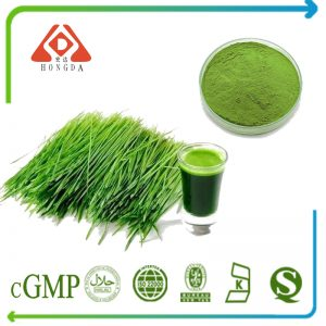 Barley Grass Powder 80Mesh TLC
