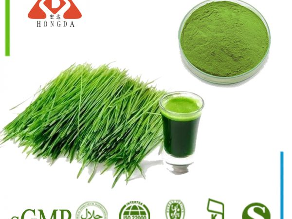 Barley Grass Extract 10:1 TLC
