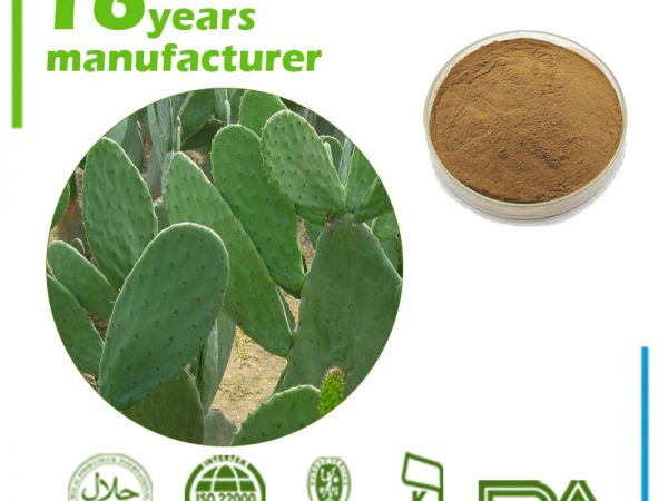 Cactus Extract 10:1 TLC (Caralluma Fimbriata Extract)