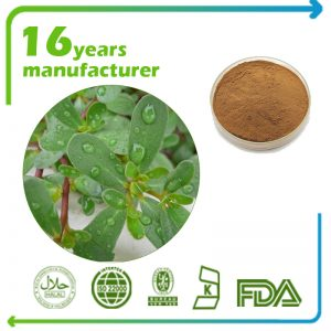 Bacopa Monniera Extract Bacosides 50% Gravimetric (India)