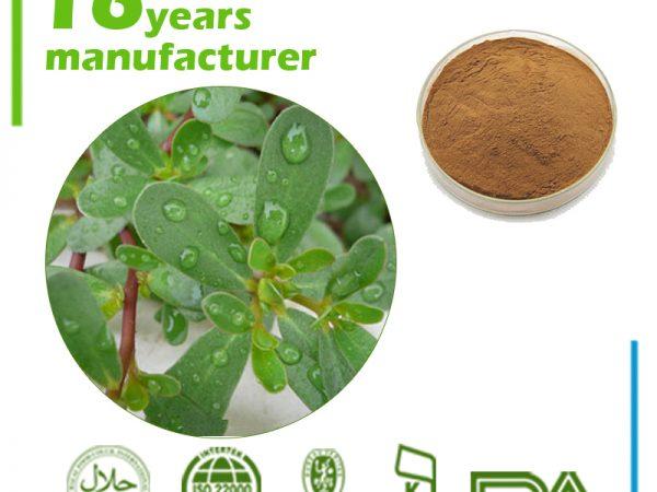 Bacopa Monniera Extract Bacosides 50% UV (India)