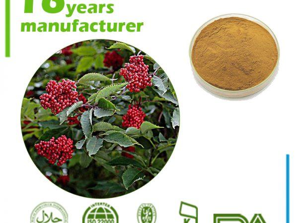 Elderberry Extract 10:1 TLC
