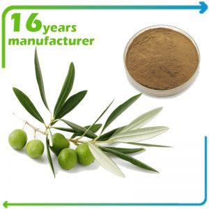 Olive Leaf Extract Oleuropein 6% HPLC