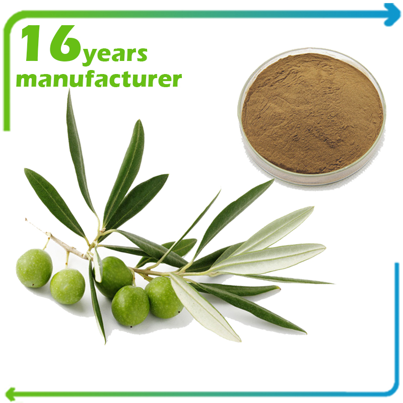 Olive Leaf Extract Oleuropein 10% HPLC