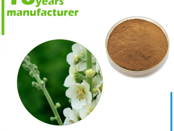 Mullein Extract 10:1 TLC