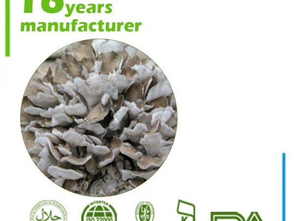 Maitake Mushroom Extract Polysaccharide 30% UV