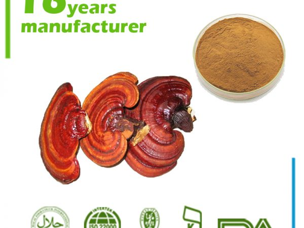 Reishi Mushroom Extract Polysaccharides 30% UV