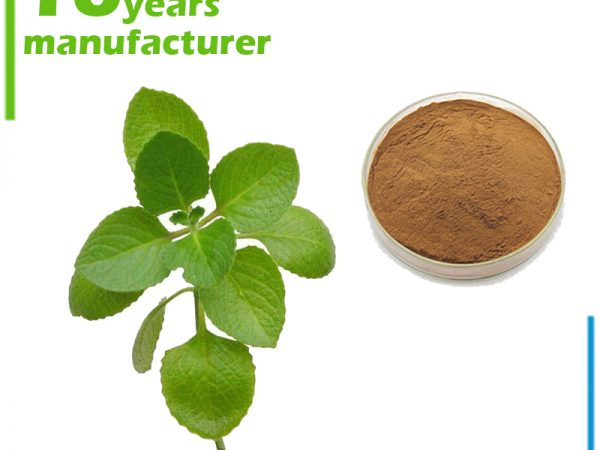 Oregano Leaf Extract 10:1 TLC