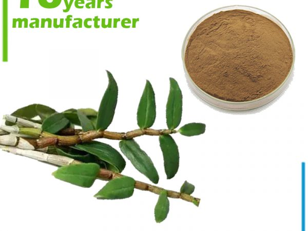 Dendrobium Extract 10:1 TLC
