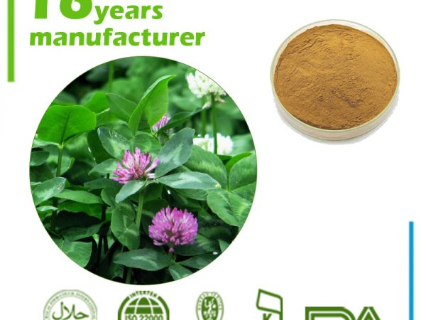 Red Clover Extract 10:1 TLC