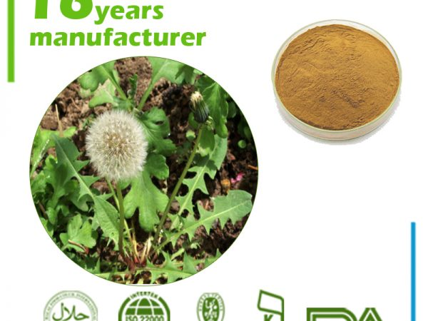 Dandelion Root Extract 4:1 TLC