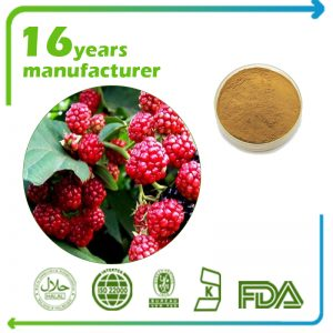 Raspberry Extract 10:1 TLC