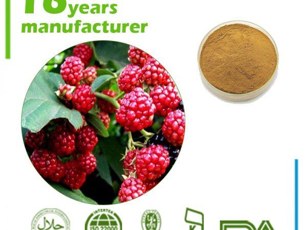 Raspberry Leaf Extract 4:1 TLC
