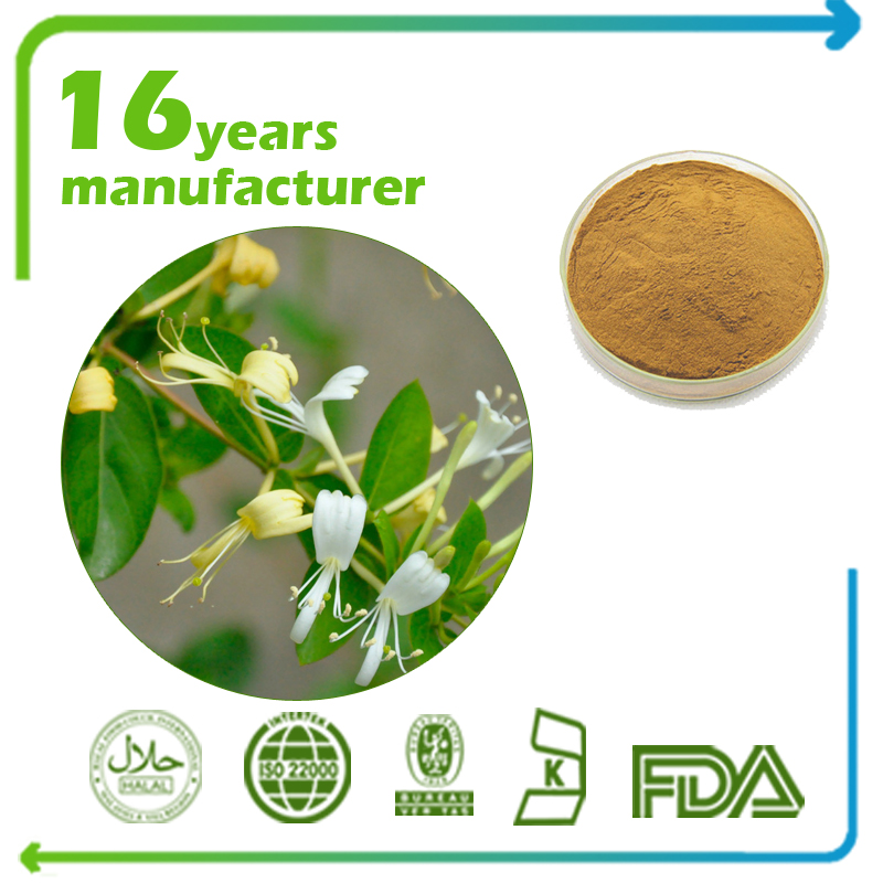 HoneySuchle Flowers Extract 7% Chlorogenic , 0.5% Galuteolin