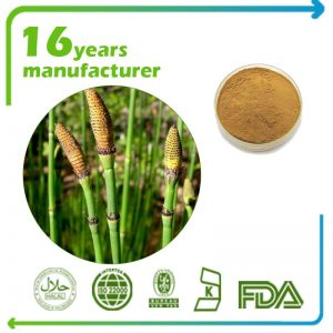 Horsetail Extract 4:1 TLC (Shavegrass Extract)