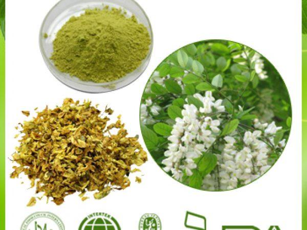 Sophora Japonica Extract 95% NF11 Rutin UV