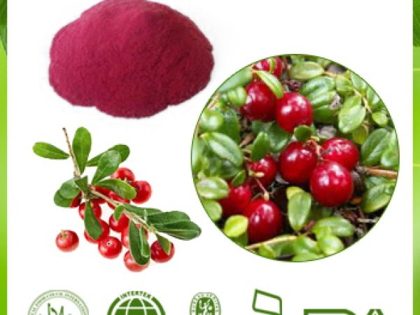 Bilberry Extract 4:1 TLC
