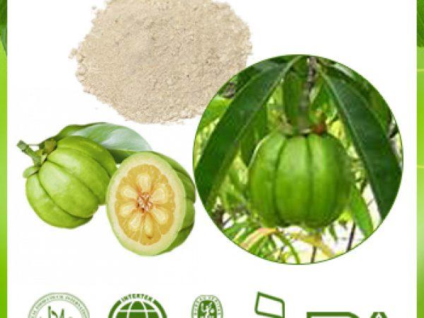 Garcinia Cambogia Extract Hydroxycitric Acid (HCA) 50% HPLC