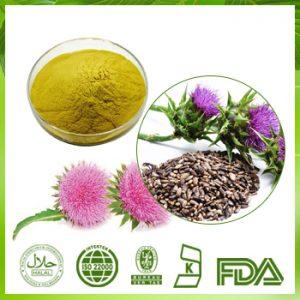 Echinacea Extract Polyphenols 4% UV