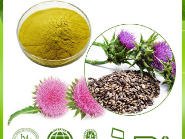 Echinacea Extract 1% Chicoric Acid HPLC