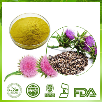 Echinacea Extract 4% Chicoric Acid HPLC
