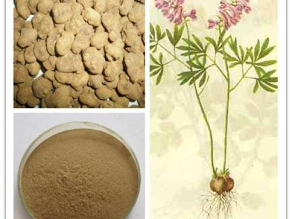 Corydalis Extract 4:1 TLC