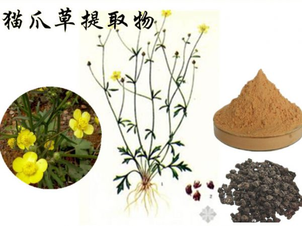Cat's Claw Extract Alkaloids 3% UV
