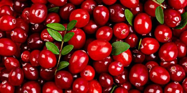 Cranberry Fruit Extract 10:1 TLC
