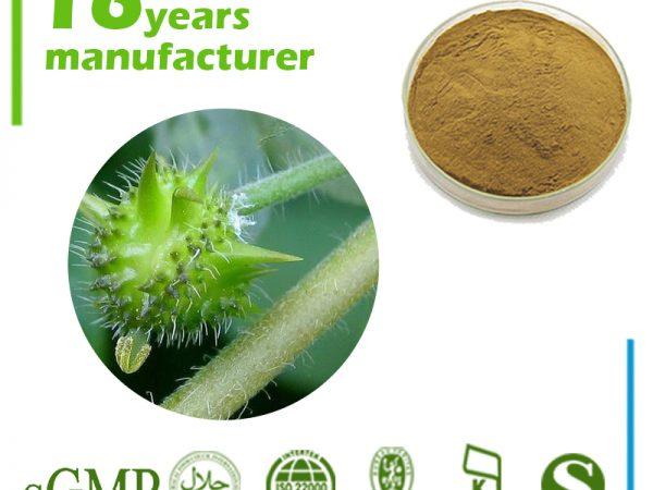 Tribulus Terrestris Extract Total Saponins 60% UV