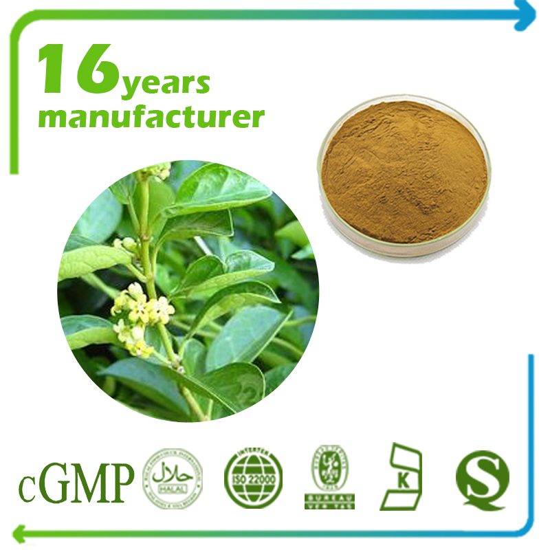 Gymnema Sylvestre Extract Gymnemic acids 25% Gravimetry