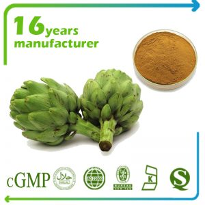 Artichoke Extract 10:1 TLC