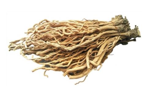 Isatis Root Extract 4:1 TLC