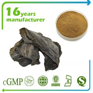 Kelp Extract 4:1 TLC (Laminaria digitate)