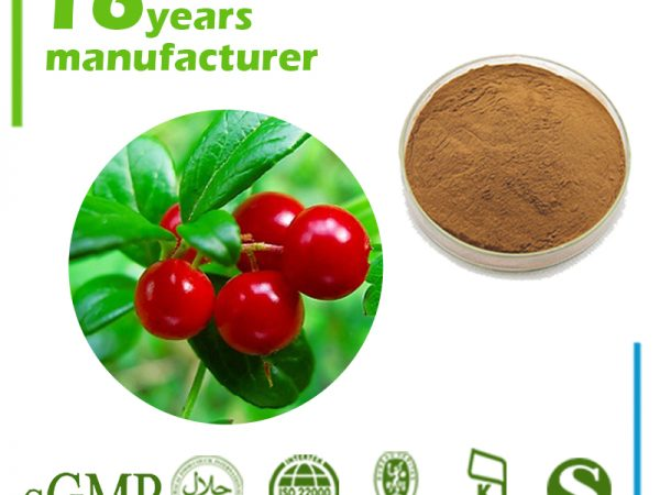 Uva Ursi Extract 20% Ursolic Acid