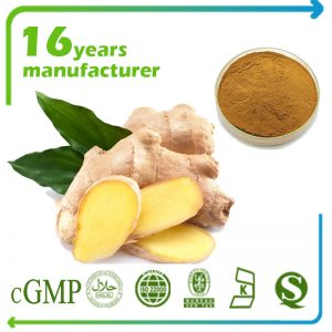 Ginger Extract Ginsenosides 4% HPLC