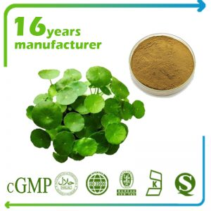 Gotu Kola Extract 10% Total Triterpenes (Centella Asiatica Extract)