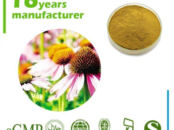 Echinacea Extract Cichoric acid 1% HPLC