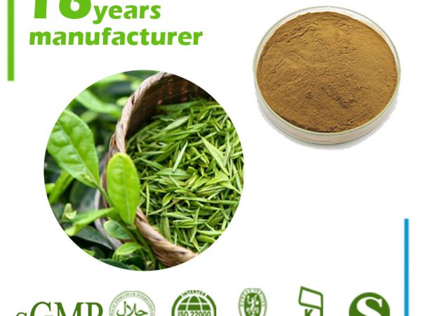 Green Tea Extract 20% L-Theanine HPLC