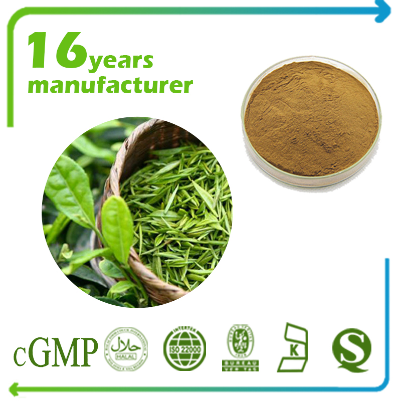 Green Tea Extract Polyphenols 98% UV (EGCG 45% HPLC)