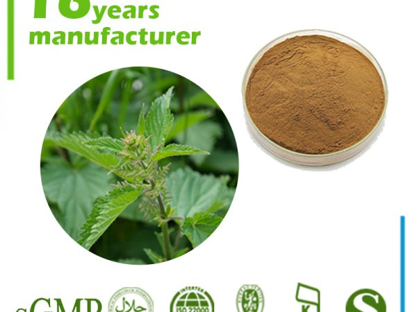 Nettle Root Extract 10:1 TLC