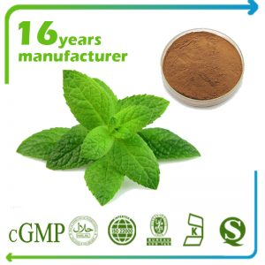 Lemon Balm Extract Rosmarinic Acid 5% HPLC