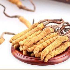 Cordyceps Sinensis Extract Polysaccharide 30% UV (Canada)