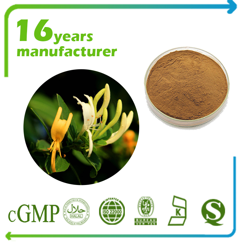 Honeysuckle Extract Chlorogenic Acid 5% HPLC (Lonicera Japonica Extract)
