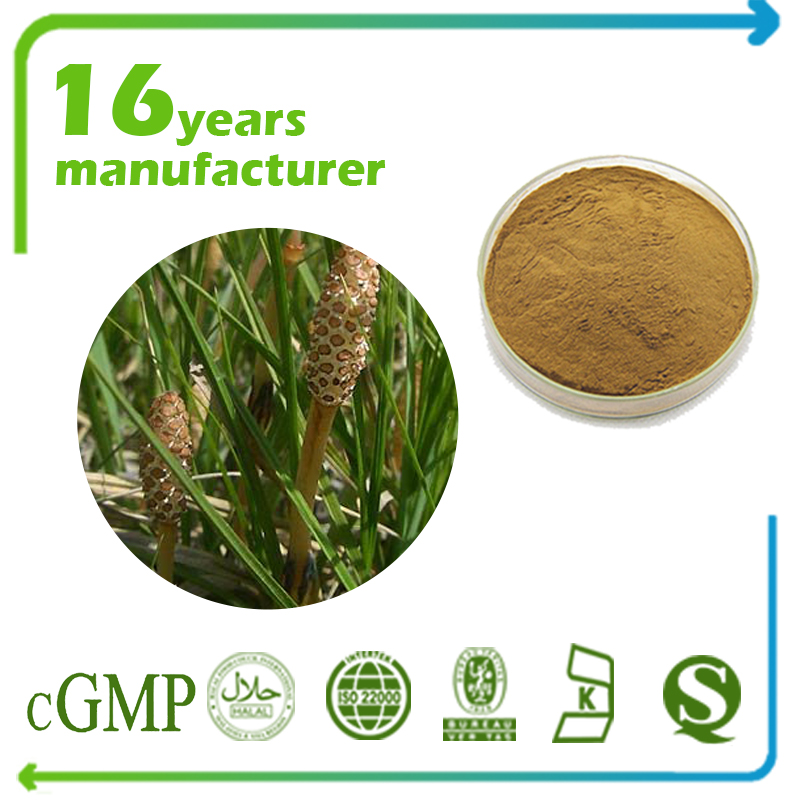 Horsetail Extract 10:1 TLC (Shavegrass Extract)