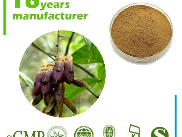 Mucuna Pruriens Extract L-Dopa 40% HPLC