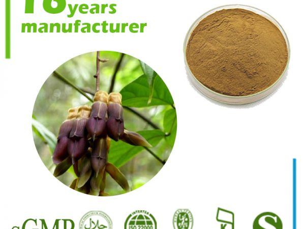 Mucuna Pruriens Extract L-Dopa 15% HPLC (Brown yellow)