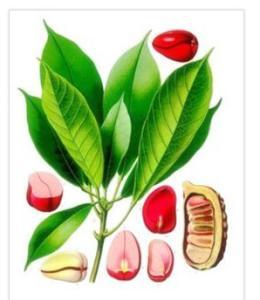 Kola Nut Extract Caffeine 20% HPLC