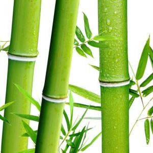 Bamboo Extract Silica 70% UV