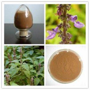 Coleus Forskohlii Extract Forskolin 1% HPLC (Plectranthus Barbatus Extract, India)