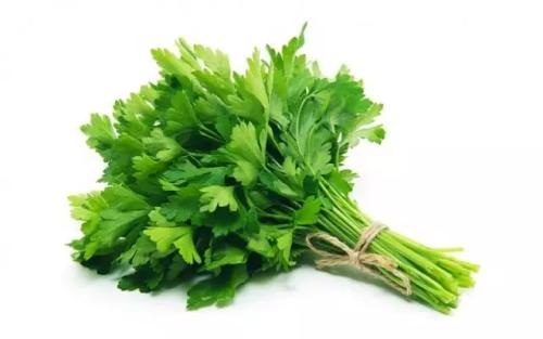 Parsley Extract 10:1 TLC